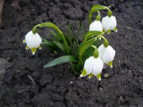 Весна в карпатах - крокуси, білоцвіти і блакитне небо